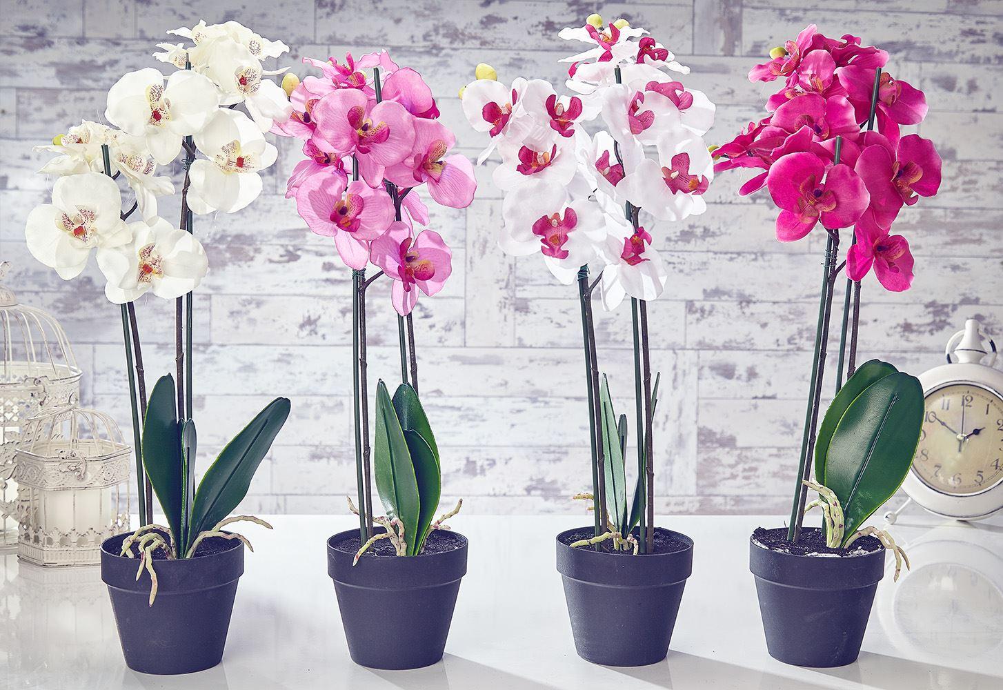 Orhidejas mājās: tas ir slikti, vai tomēr labi?! Izlasi!