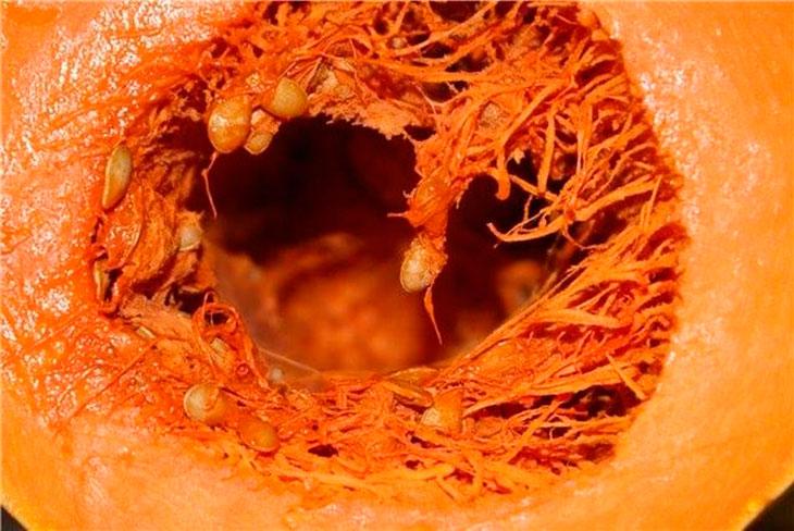 Pievērs uzmanību! Ķirbis rada daudzus neatgriezeniskus procesus organismā. Tas ir jāzina!