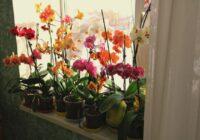 Augšana ir garantēta! Pārstādiet orhideju šajā maisījumā…