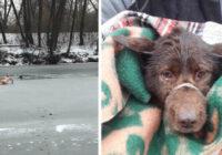Viņš mēģināja glābt slīkstošu klaiņojošu suni – un pats ielūza ledū!  Neprātis vai varonis?