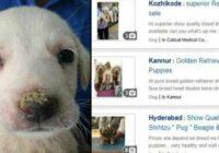 Facebook vairāk nedrīkst pārdot kucēnus vai lietas no ādas un kažokādām. Bodīte aizvērta!