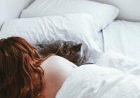 Jūs joprojām gultā laižat kaķi? Iesakām ar steigu izlasīt šo rakstu un uzzināt ko tādu, ko tiešām iepriekš nezinājāt