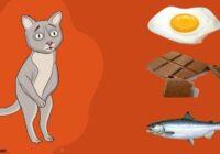 8 iecienītas delikateses, kuras nedrīkst dot kaķiem. Tad nu gan…