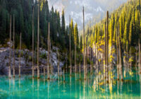Kazahstānā ir ezers, kur koki aug kājām gaisā – kā pasaku filmā Neticama vieta!