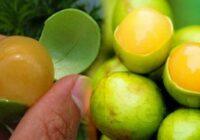 Šis auglis cīnās ar bezmiegu un paaugstina smadzeņu funkciju pa dažām minūtēm!