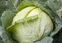 Ir tikai viens dārzenis, kurš 100% palīdz hipertoniķiem. Lūk, tas Lietojiet to pastāvīgi!