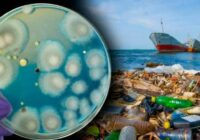 """Pakistānā atrasts pelējums, kas spēj """"saēst"""" visu, uz zemes esošo plastmasu. Ekoloģijas problēma atrisināta?"""