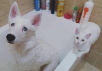 Ģimene gribēja no patversmes paņemt kaķēnu savam mazajam kucēnam, bet kaķēns viņus gaidīja jau uz ielas