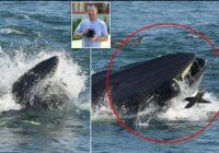 Valis gandrīz norija tūristu, bet atgrieza viņu dzīvu atpakaļ tieši pludmalē. Trūkst vārdu!