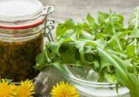 Kā sagatavot pieneņu sīrupu: palīdz aknu, nieru un kuņģa slimību gadījumā. Tas ir brīnumains zieds!